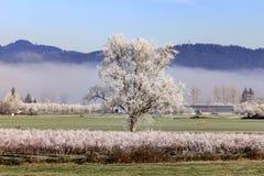Lantlig vinterlantgård som är scenisk i Fraser Valley Canada Arkivbild