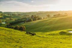 lantliga Australien Arkivfoto