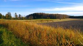 Lantliga fält på eftermiddagsolen Royaltyfri Fotografi