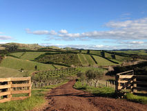 Lantliga gröna Rolling Hills i bygden Royaltyfri Foto