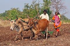 Lantliga Indien Arkivbilder
