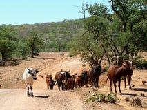 lantliga namibia arkivfoton