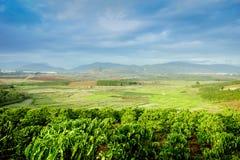 Lantliga Vietnam på det Don Duong landskapet Arkivfoton