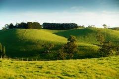 Lantligt Australien landskap Royaltyfri Bild