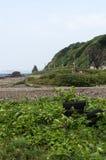 Lantligt avfall på kusten Royaltyfri Foto