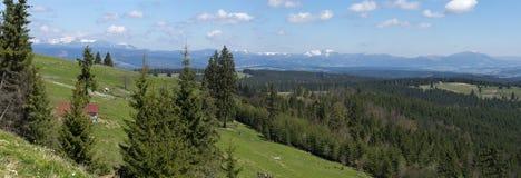 Lantligt Carpathian landskap Rumänien royaltyfria foton