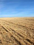 Lantligt fält med ljus bakgrund för blå himmel Royaltyfria Bilder