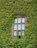 lantligt fönster Royaltyfri Foto