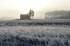 Lantligt frostigt landskap på tidig vintermorgon för förkylning Royaltyfria Foton