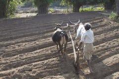 Lantligt jordbruk Arkivfoton