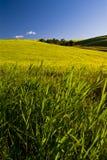 Lantligt land som tänds av solljus, Puglia, Italien royaltyfri bild