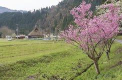 Lantligt landskap av Kyoto, Japan royaltyfria bilder