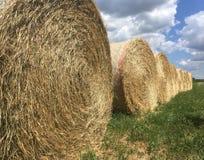 Lantligt landskap av sommarfält av Tuscany Royaltyfria Foton