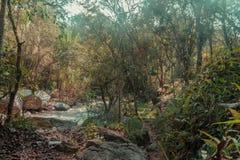 Lantligt landskap av träd och den härliga floden med kristallklart vatten och koppla avmiljön royaltyfri foto