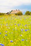 Lantligt landskap. Ett ensamt lantbrukarhem. Blommande fält. Arkivfoton