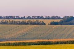 Lantligt landskap för fältsolnedgångsommar royaltyfria foton