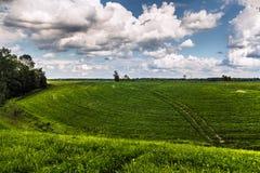 Lantligt landskap för gräsfält Royaltyfri Foto