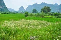 Lantligt landskap för härlig karst på Guilin, Kina Fotografering för Bildbyråer