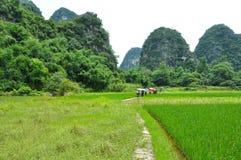 Lantligt landskap för härlig karst på Guilin, Kina Arkivfoton