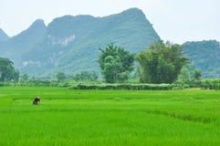 Lantligt landskap för härlig karst på Guilin, Kina Arkivbild