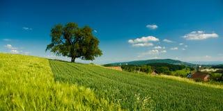 lantligt landskap för panorama Arkivbilder