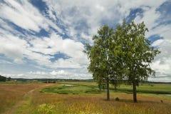 Lantligt landskap för sommar Royaltyfria Bilder