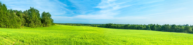 Lantligt landskap för sommar en panorama med ett fält och den blåa himlen fotografering för bildbyråer