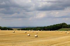 Lantligt landskap f?r sommar med plockningf?ltet, hayrolls, bl? himmel, tr?d p? horisonten solig morgon royaltyfria bilder