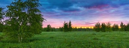 Lantligt landskap för sommar med skogen, en äng och dimma på soluppgång arkivfoto