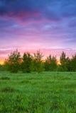 Lantligt landskap för sommar med skogen, en äng och soluppgång fotografering för bildbyråer