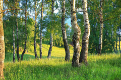 Lantligt landskap för sommar med skogen och ängen på solnedgång _ Royaltyfri Fotografi