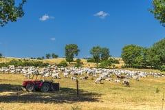Lantligt landskap f?r sommar ?ver Val D ?Agri, Basilicata fotografering för bildbyråer