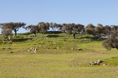 Lantligt landskap i Alentejoen, Portugal Arkivfoto