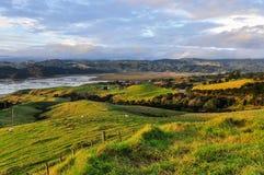 Lantligt landskap i den Coromandel halvön, Nya Zeeland Royaltyfri Fotografi