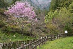 Lantligt landskap i Japan för blomninggreen för filial ljus tree för fjäder för natur Fotografering för Bildbyråer