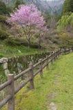 Lantligt landskap i Japan för blomninggreen för filial ljus tree för fjäder för natur Royaltyfri Fotografi