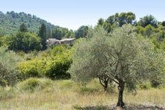 Lantligt landskap i Provence med den olivgröna treeandstugan, söder av Arkivbild