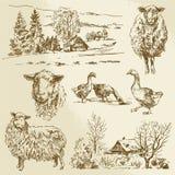 Lantligt landskap, lantgårddjur Arkivfoto