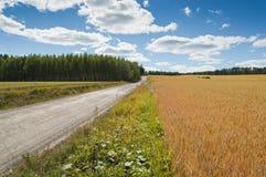 Lantligt landskap med cornfielden och vägen Royaltyfri Foto