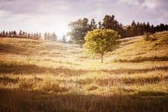 Lantligt landskap med det enkla trädet Arkivfoto