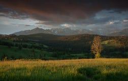 Lantligt landskap med det ensamma trädet och berg på bakgrunden Fotografering för Bildbyråer