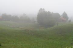 Lantligt landskap med dimma i morgonen Royaltyfri Bild