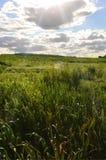 Lantligt landskap med ett grönt fält under en molnig blått sk royaltyfri foto