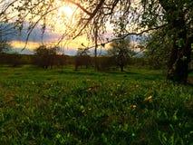 Lantligt landskap med solnedgång Royaltyfri Fotografi