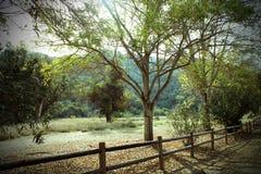 Lantligt landskap och staket Royaltyfri Bild