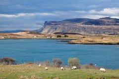 Lantligt landskap på ön av Mull, Skottland Arkivfoto