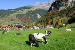 Lantligt landskap på byn av Engelberg på Schweiz Royaltyfri Bild
