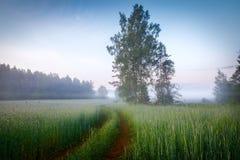 Lantligt landskap på gryning med morgonmisten som svävar över fältet arkivbild