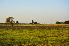 Lantligt landskap Pakistan Arkivbilder