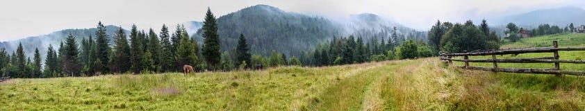 Lantligt landskap, panorama, baner - sikt av fältet mot bakgrunden av berg med att beta kor Arkivbild
